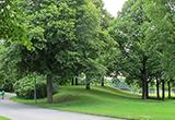 Mit Linden bewachsener Hügel, an dem der Erinnerungsort entstehen soll
