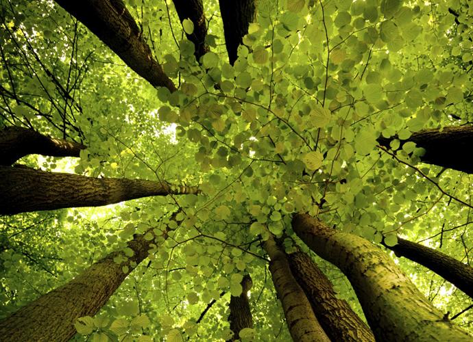 Lebensraum Wald Arbeitsblatter